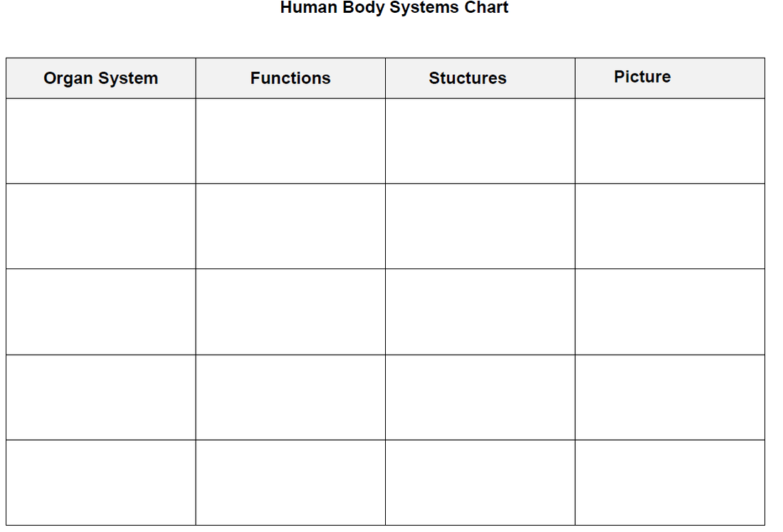 Human Body Systems Ms August